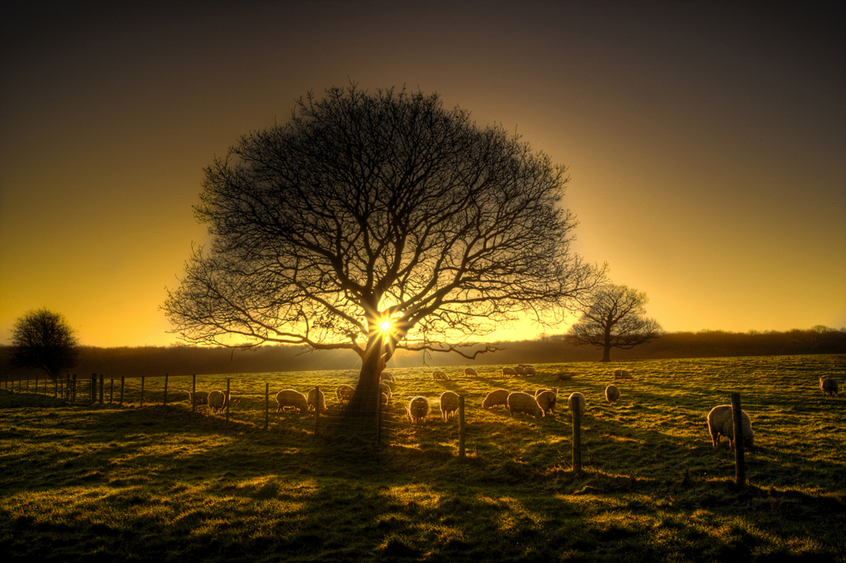 tree of ight_web
